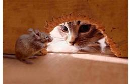 Как вывести мышей из дома и на даче - избавиться от них навсегда