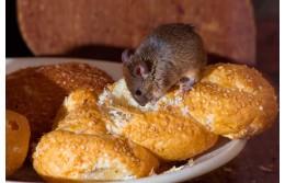 Как вывести мышей из квартиры быстро и результативно