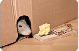 Средство от мышей на даче и в доме