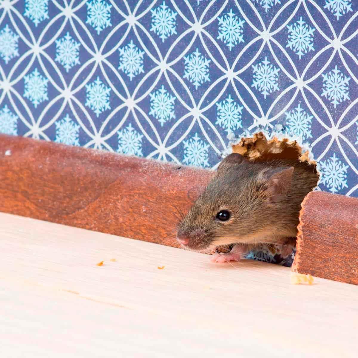 Средство от мышей на даче
